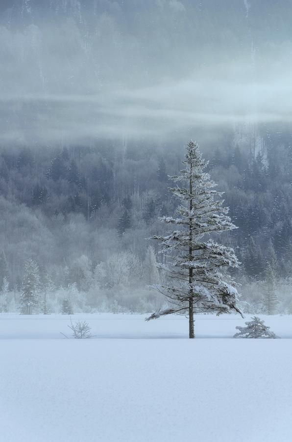 Ammergauer Alpen Bäume Winter Simon Bauer