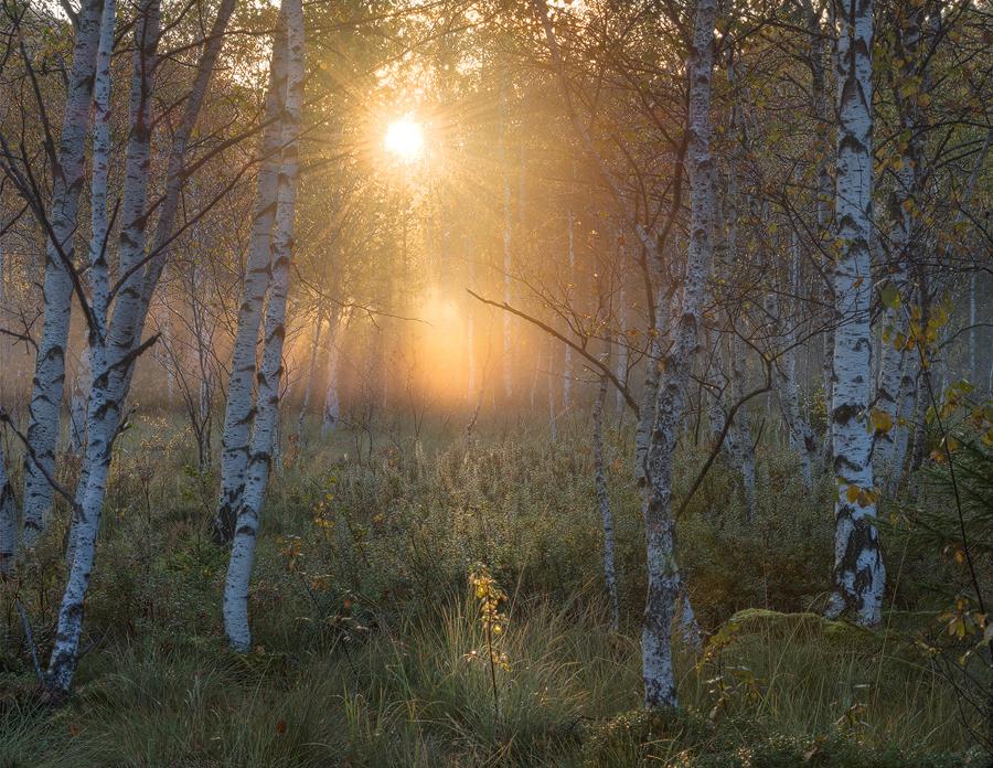 Landschaftsfotografie Simon Bauer Birkenwald