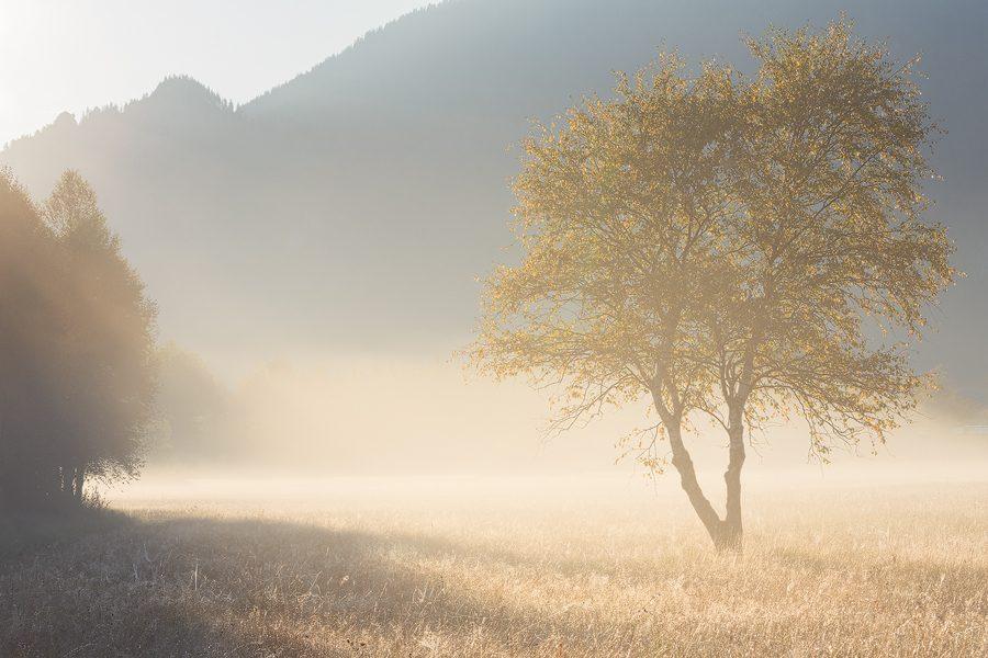 Mythos Bayern – Wald, Gebirg und Königstraum
