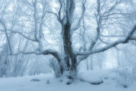 Winterwunderland in der bayerischen Rhön